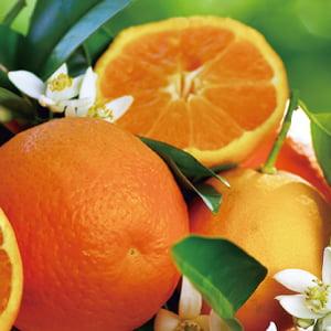 マンダリンオレンジ果皮油